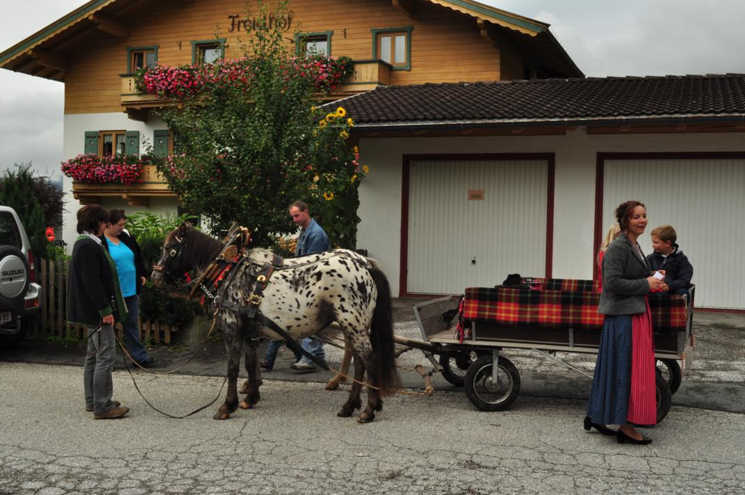 cows-come-home-sep-2010-011