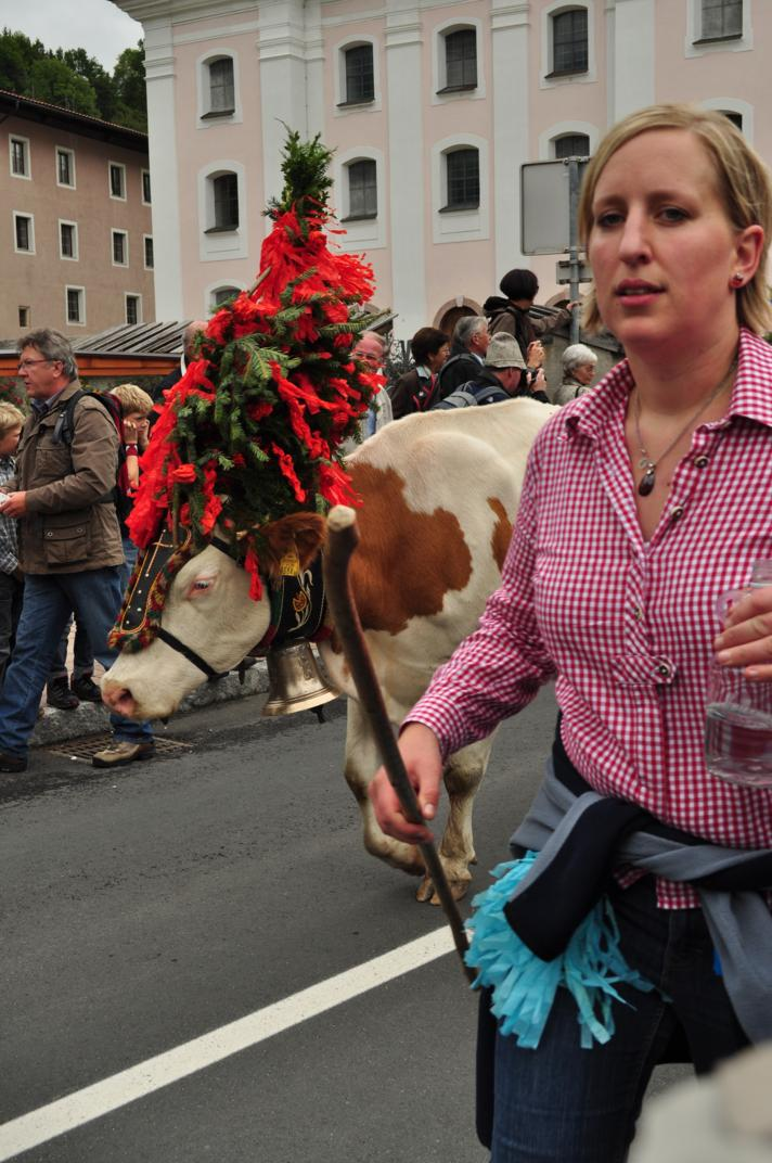 cows-come-home-sep-2010-018