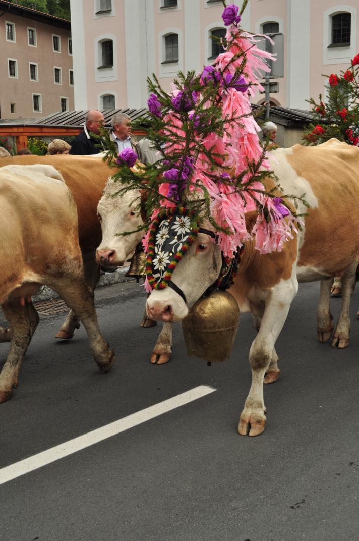 cows-come-home-sep-2010-019