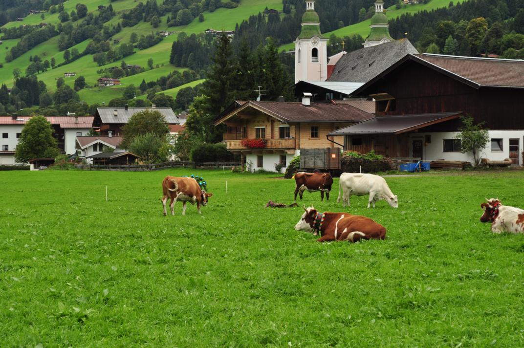 cows-come-home-sep-2010-042
