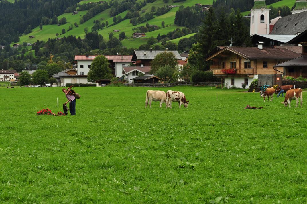 cows-come-home-sep-2010-049