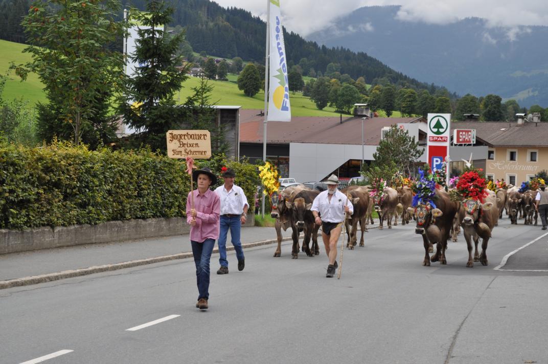 cows-come-home-sep-2010-056