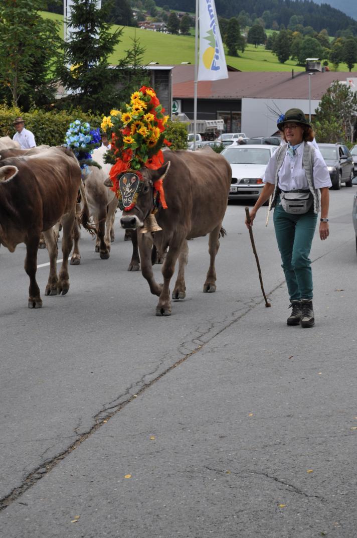 cows-come-home-sep-2010-058