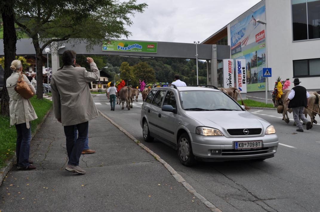 cows-come-home-sep-2010-059