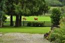 cows-come-home-sep-2010-040
