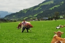 cows-come-home-sep-2010-046
