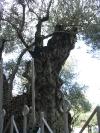 israel_20090143