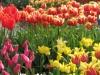springbreak_20090408_199.jpg