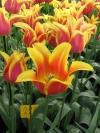 springbreak_20090408_200.jpg
