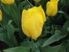 springbreak_20090408_201.jpg