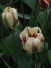 springbreak_20090408_205.jpg