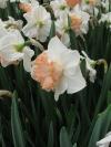 springbreak_20090408_206.jpg
