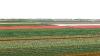 springbreak_20090408_213.jpg