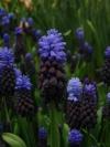 springbreak_20090408_239.jpg