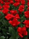 springbreak_20090408_252_0.jpg