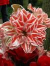 springbreak_20090408_255.jpg