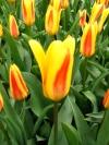 springbreak_20090408_269.jpg
