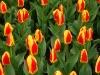 springbreak_20090408_302.jpg