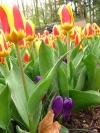 springbreak_20090408_305.jpg