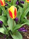 springbreak_20090408_306.jpg