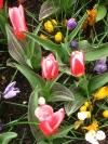 springbreak_20090408_307.jpg