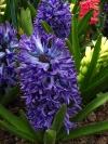 springbreak_20090408_330.jpg