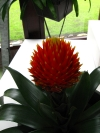 springbreak_20090408_336.jpg