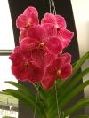 springbreak_20090408_345.jpg