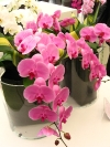 springbreak_20090408_350.jpg